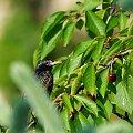 Plener przyrodniczy/krajoznawczy #dzikość #fauna #flora #kolory #makro #natura #owady #przyroda #ptaki #zbliżenie #zwierzaki #zwierzęta