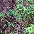 Przyroda #Las #lasy #grzyby #wypoczynek #grzybobranie #Polska #jagody
