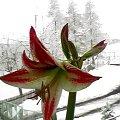 #natura #kwiat #zima #piękny #best